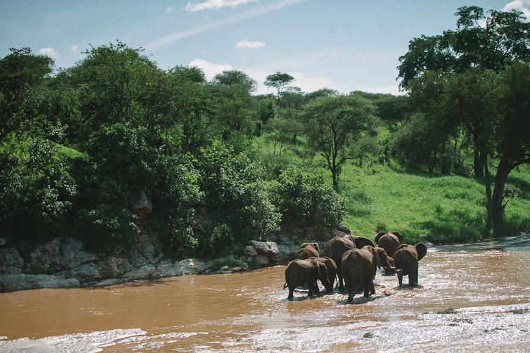 Tanzana Safari Elopement