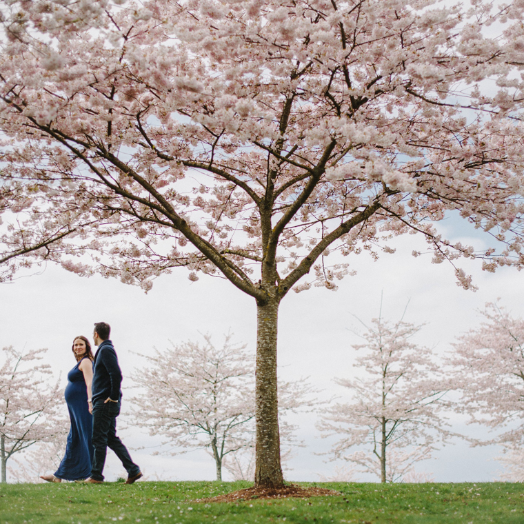 Maternity Portraits with Vancouver Cherry Blossom Trees