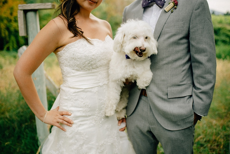 funny dog wedding picture