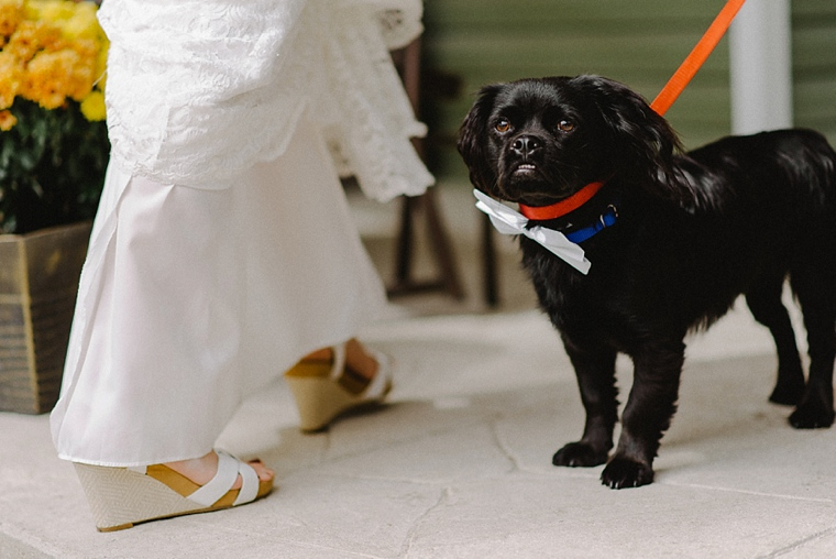black dog with white bow tie