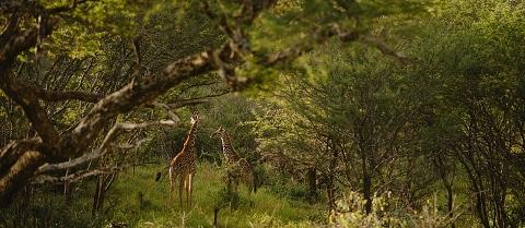 Africa Wedding Photographer_0207