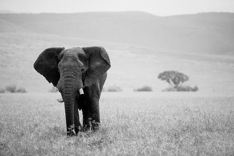 Africa Wedding Photographer_0215