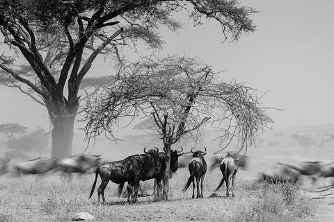 Africa Wedding Photographer_0220