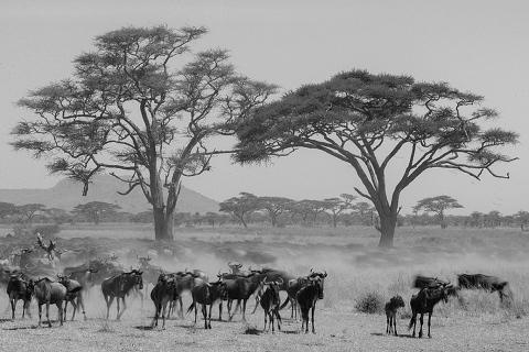 Africa Wedding Photographer_0229