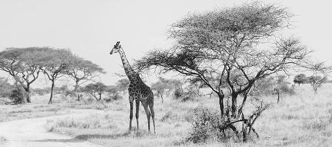 Africa Wedding Photographer_0247