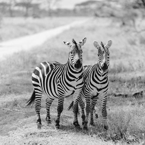 serengeti wedding photography