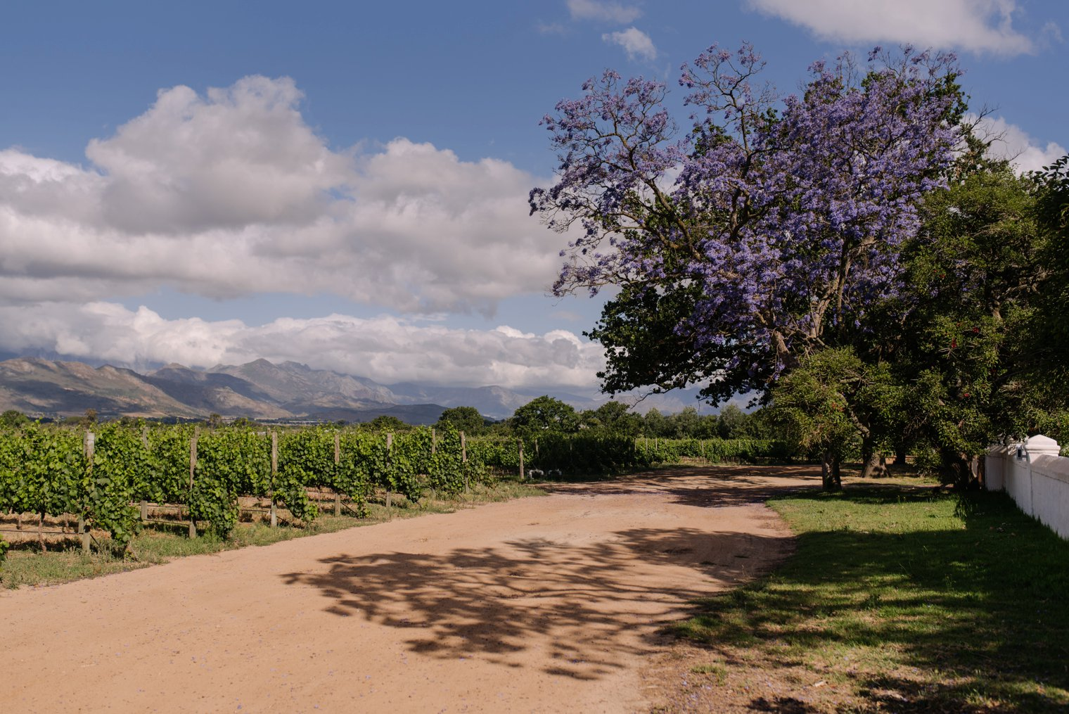 best stellenbosch wedding venue