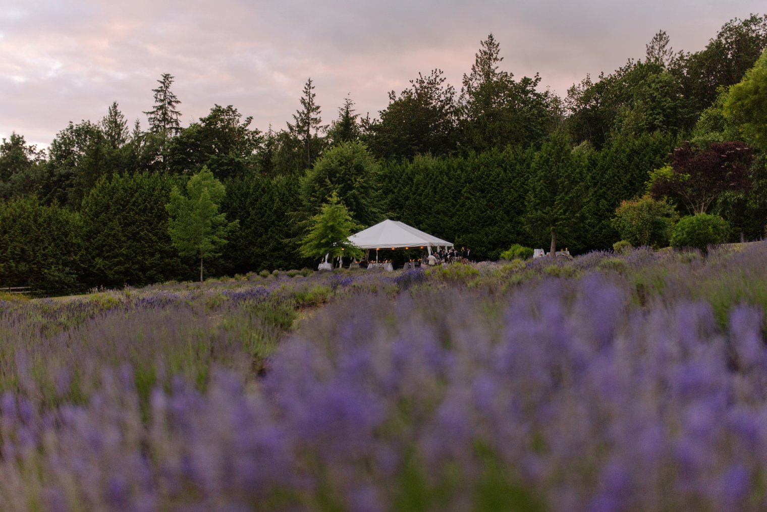 vancouver lavender farm wedding venue